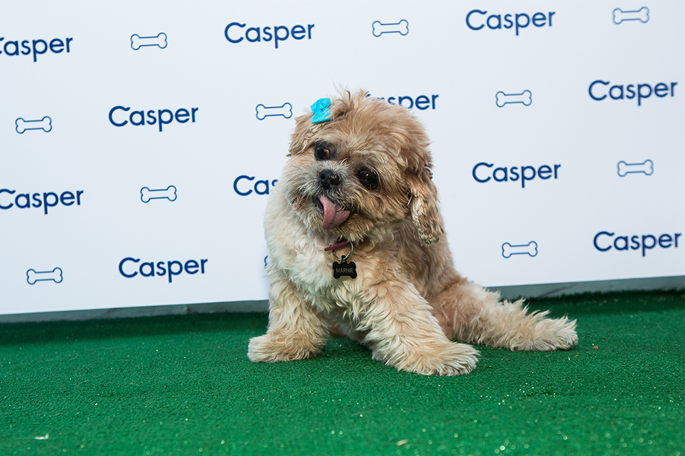 Casper Dog House